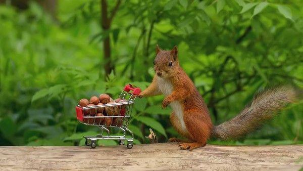Fond d 39 cran cureuil wallpaper squirrel - Image animaux gratuite ...