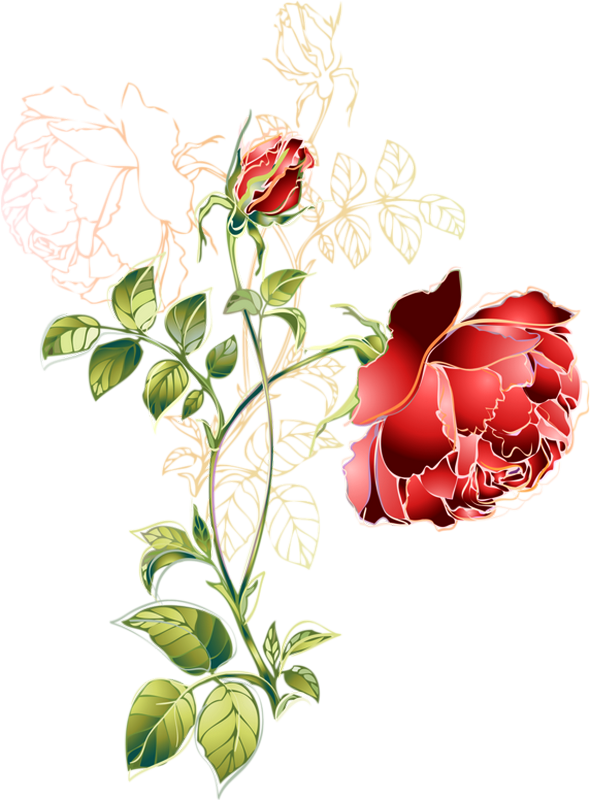 Tube Rose Rouge Dessin Png Red Rose Drawing Flower