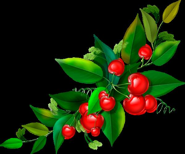 Branche de cerisier dessin - Cerisier dessin ...