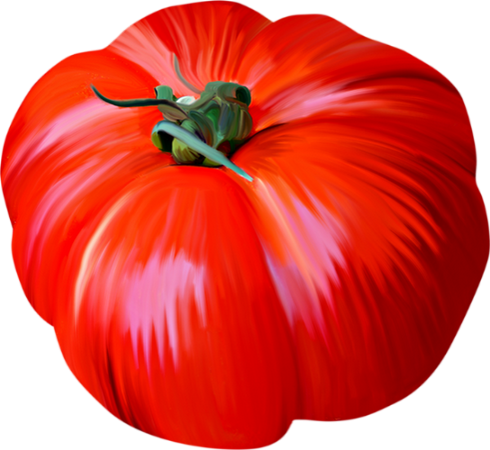 Dessin couleur tomate tomato drawing - Tomate dessin ...