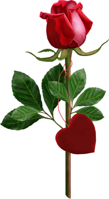 Tube Rose Rouge Dessin Png Red Rose Drawing Heart