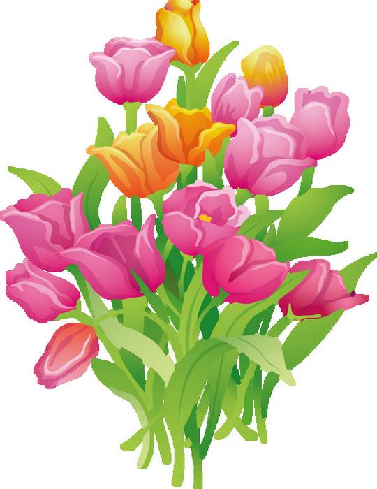 Tulipes Dessin Fleur De Printemps Tube Flower Png