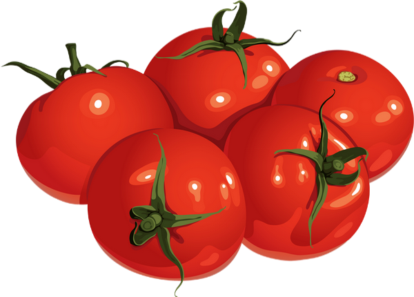 Tomates png dessin tomatoes drawing tomaten png - Tomate dessin ...
