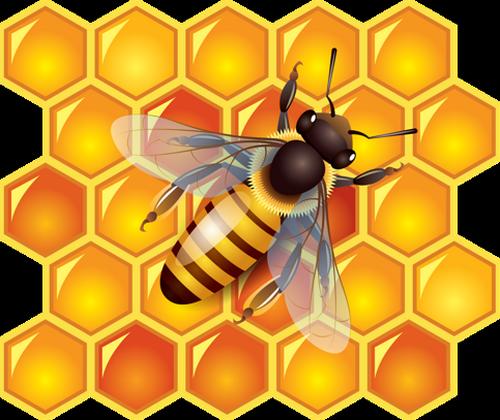 Abeille - Dessin de ruche d abeille ...