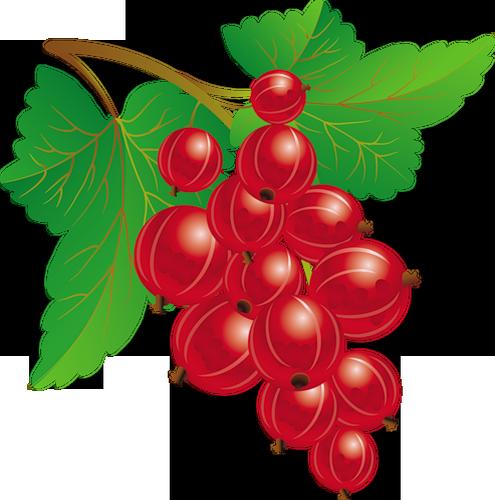 Clipart Fruits Rouges