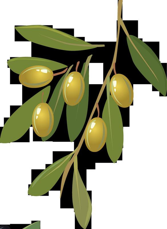 branche d 39 olivier olives dessin tube green olives png. Black Bedroom Furniture Sets. Home Design Ideas