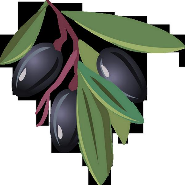 branche d 39 olivier olives dessin tube black olives png. Black Bedroom Furniture Sets. Home Design Ideas
