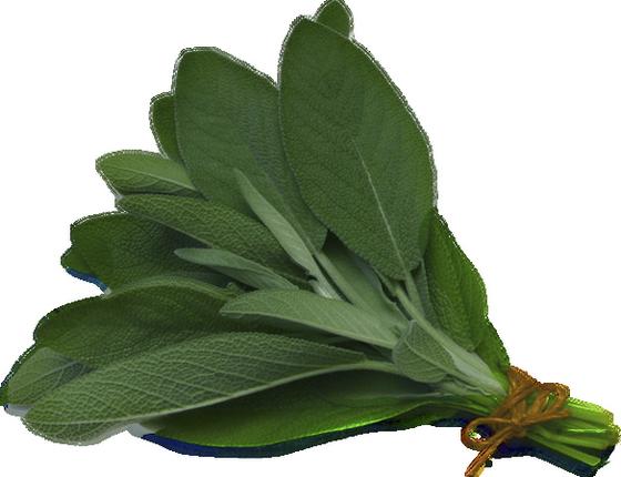 sauge plante aromatique png aromatic plant sage. Black Bedroom Furniture Sets. Home Design Ideas