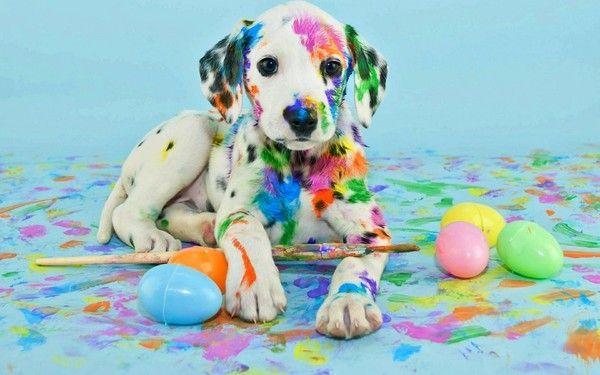 Fond d 39 cran p ques chien easter wallpaper dog for Fond ecran paques