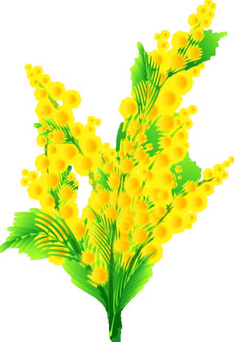 Mimosa Dessin Fleur De Printemps Tube Flower Png