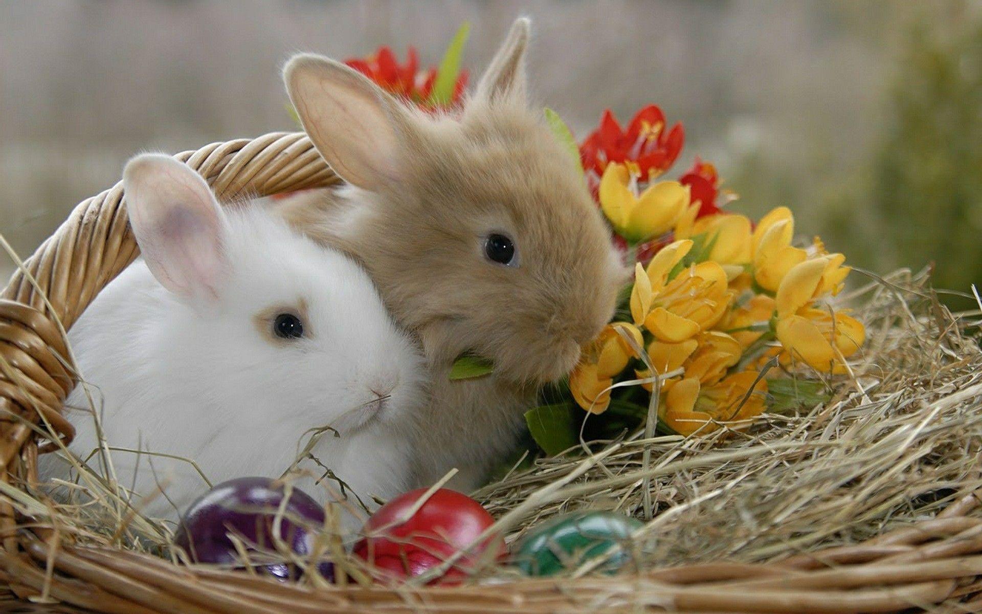 Fond d 39 cran p ques lapins easter rabbits wallpaper for Fond ecran paques