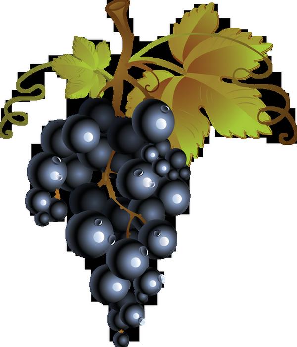 fruits raisins page 4 clip art grapes black and white clip art grape colored flowers