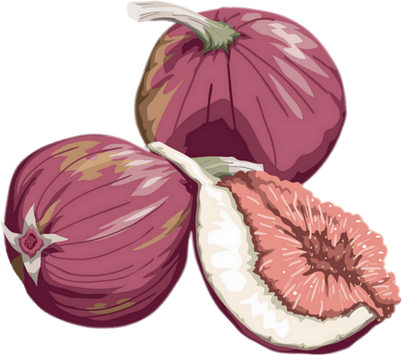 Dessin figues png illustration figs png drawing higos - Dessin figuier ...