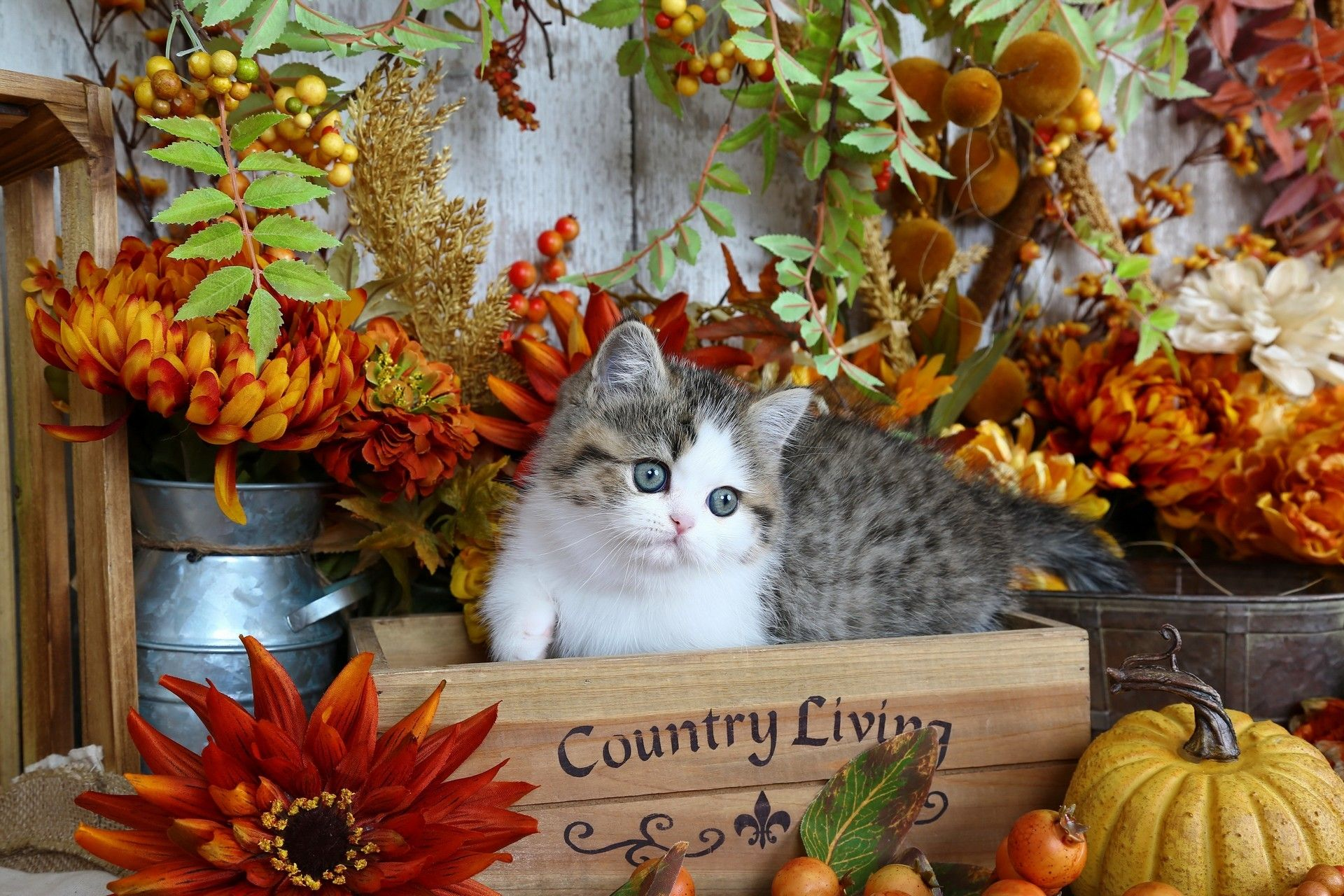 Chat Fond D Ecran D Automne Cat Autumn Wallpaper