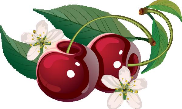 Fruits cerises - Dessin cerise ...
